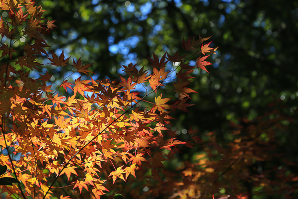 kyoto-autumn-066