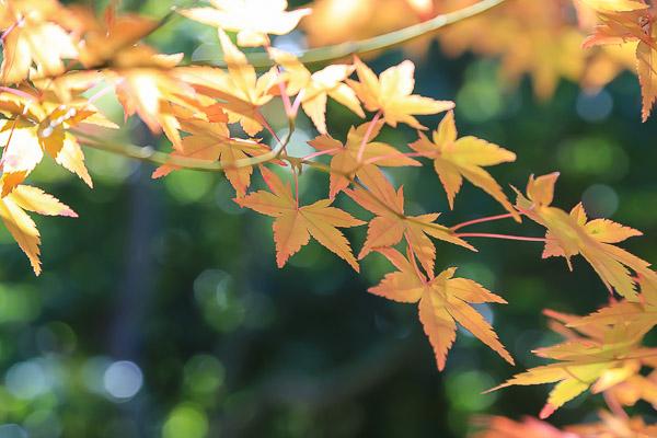 kyoto-autumn-067
