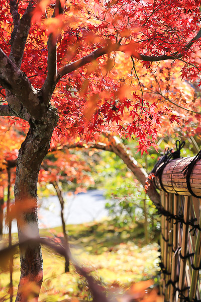 kyoto-autumn-068