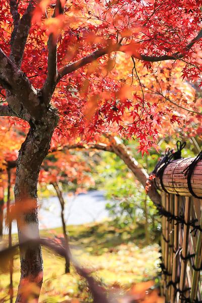 kyoto-autumn-068