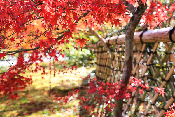 kyoto-autumn-069