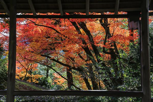 kyoto-autumn-070