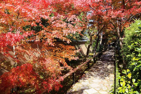 kyoto-autumn-071