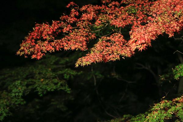 touhoku-kouyou-031