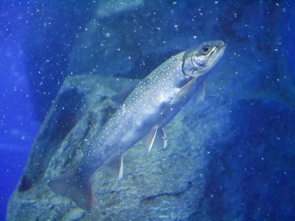 yama-aquarium-003