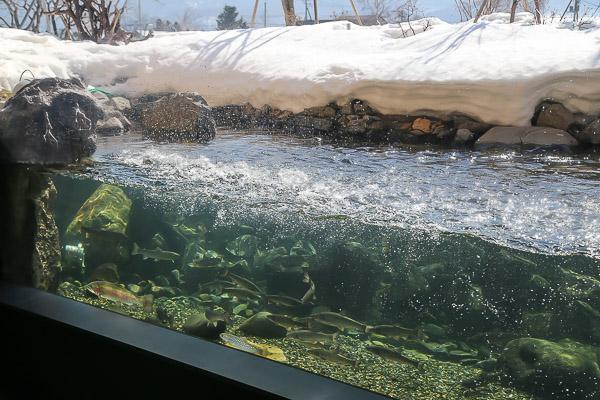 yama-aquarium-005