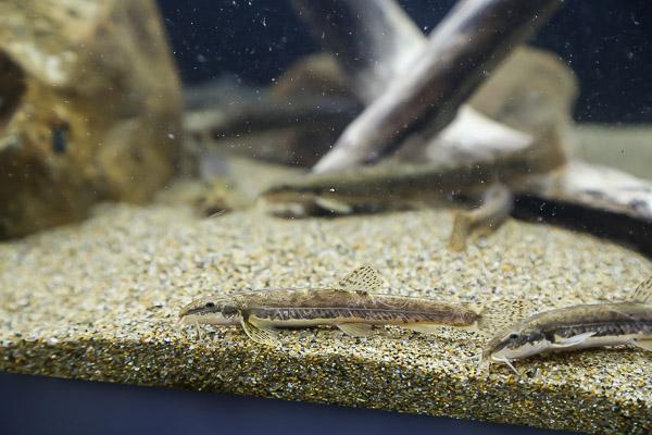 yama-aquarium-011