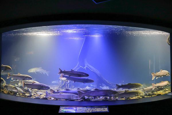 yama-aquarium-015