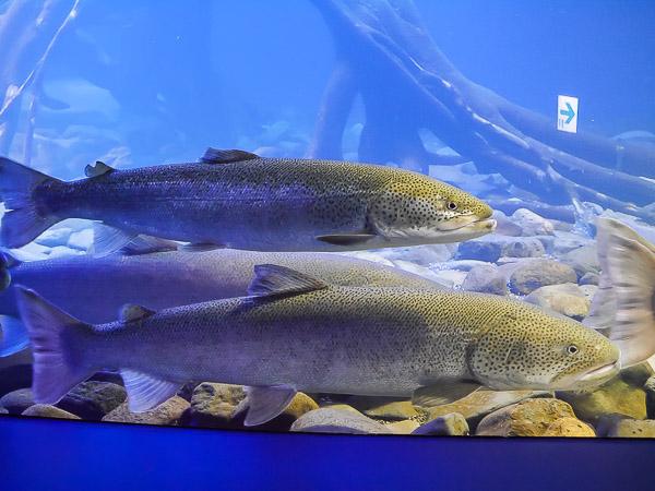 yama-aquarium-016
