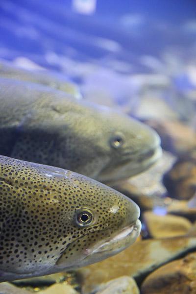yama-aquarium-017