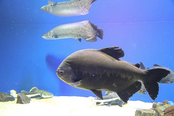 yama-aquarium-019