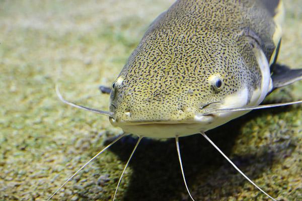 yama-aquarium-020