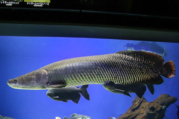 yama-aquarium-021