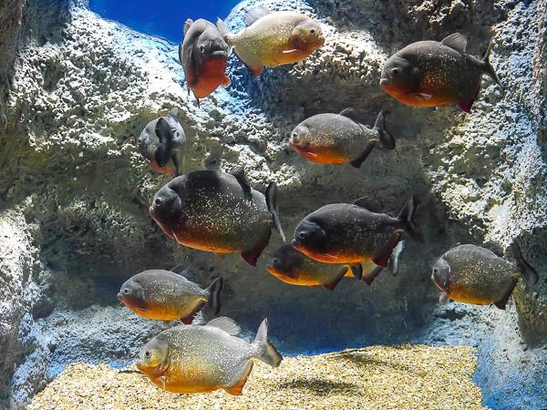 yama-aquarium-022