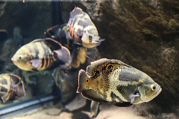 yama-aquarium-023