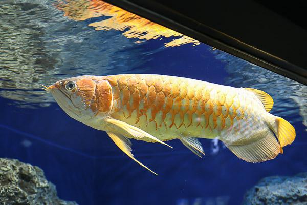 yama-aquarium-024