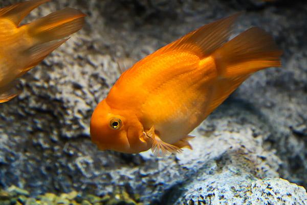 yama-aquarium-025
