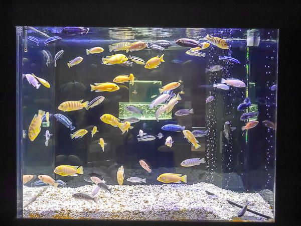 yama-aquarium-028
