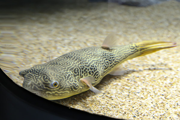 yama-aquarium-029