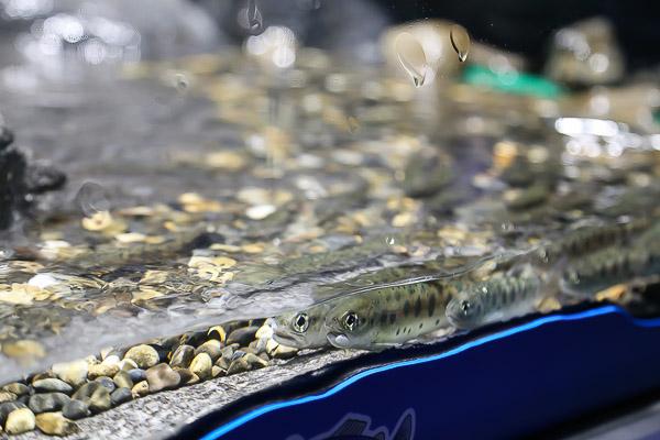 yama-aquarium-031