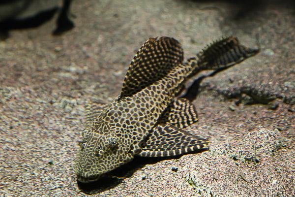 yama-aquarium-032