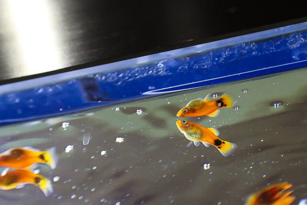 yama-aquarium-034