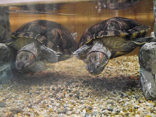 yama-aquarium-035