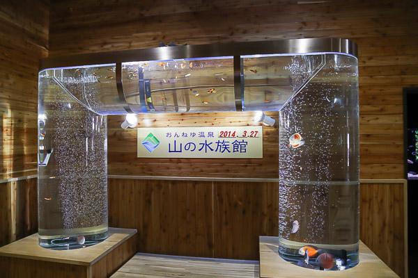 yama-aquarium-036
