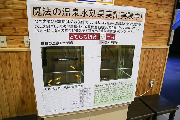 yama-aquarium-039