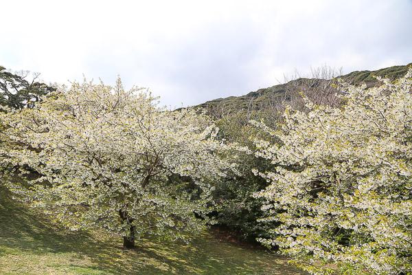 ooshima-053