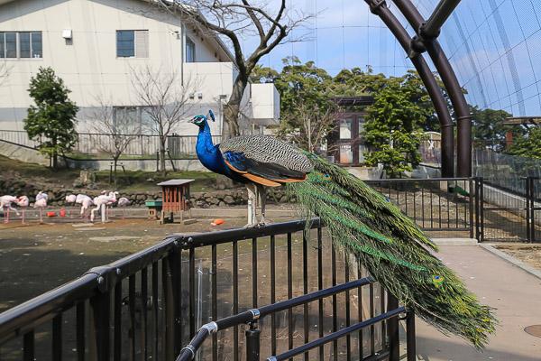 ooshima-058