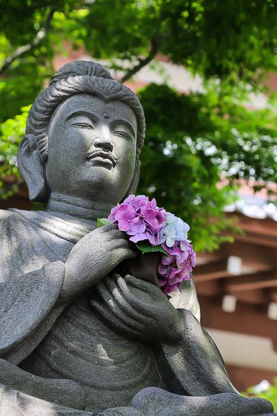 kamakura-ajisai-026