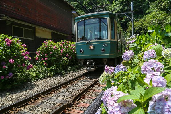kamakura-ajisai-040