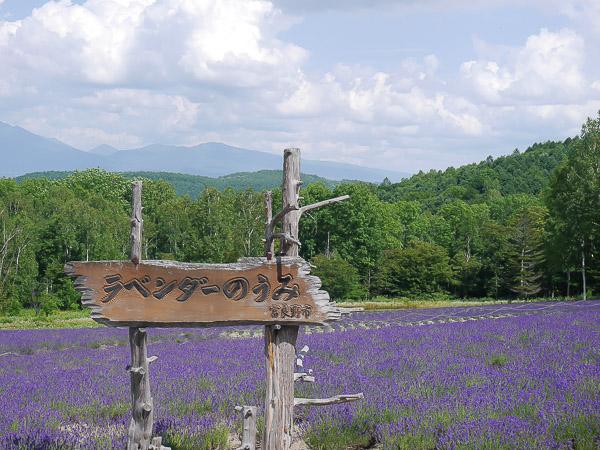 lavender-053