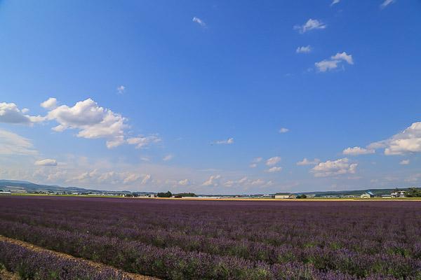 lavender-069