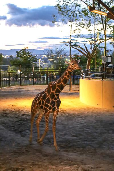 night-zoo-021