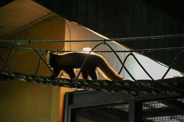 night-zoo-032