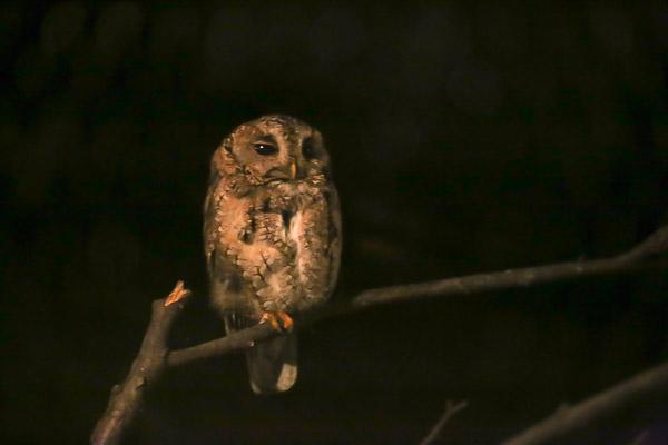 night-zoo-036