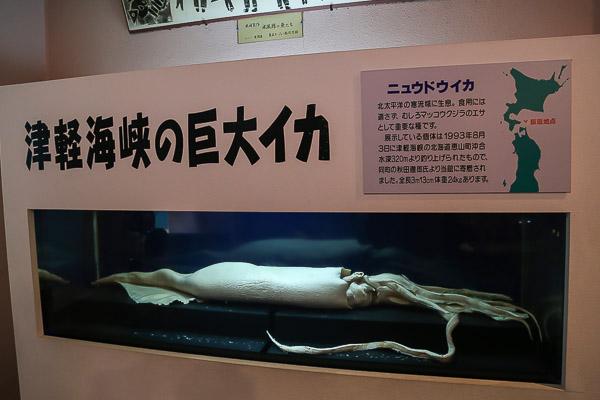 asamushi-aqu-126