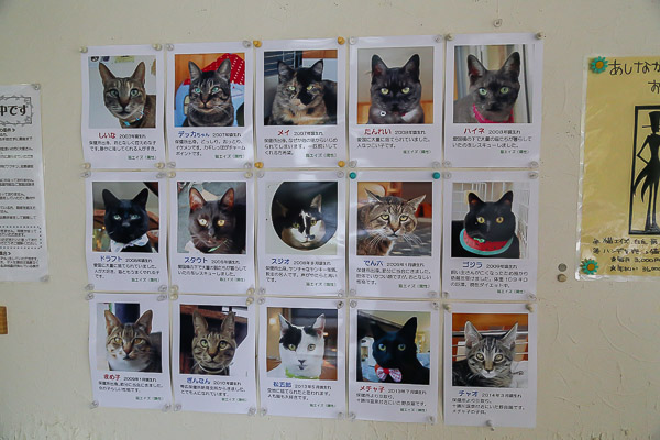 catcafe-wish-032