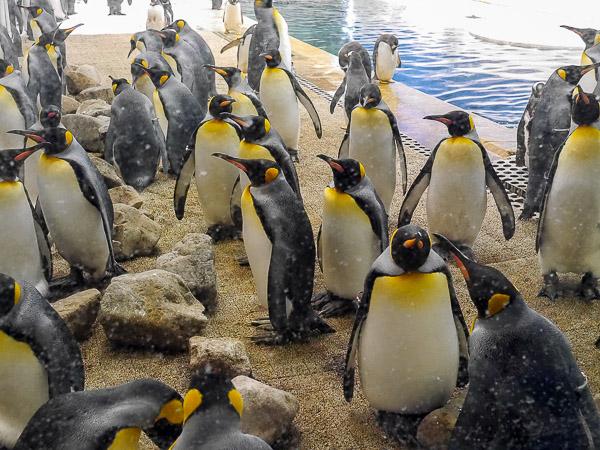adv-penguin-002