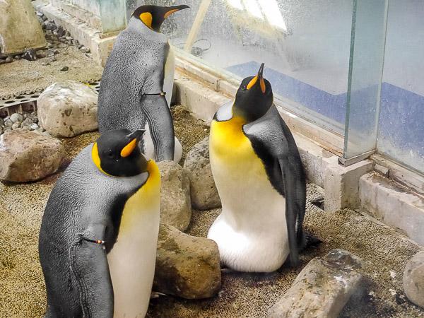 adv-penguin-004