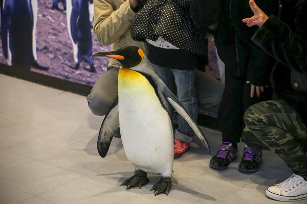 adv-penguin-008