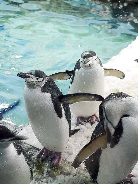 adv-penguin-010