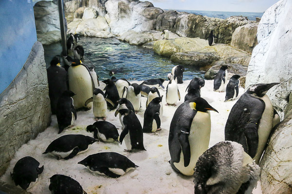 adv-penguin-013