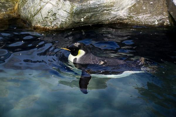 adv-penguin-017
