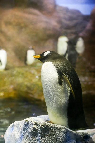 adv-penguin-019