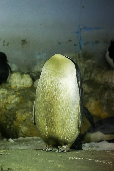 adv-penguin-024