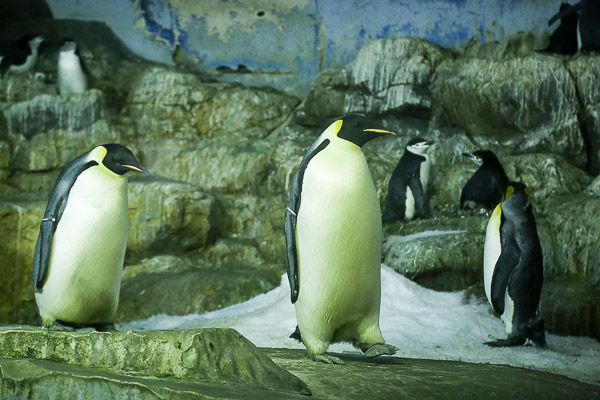 adv-penguin-025