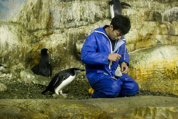 adv-penguin-026